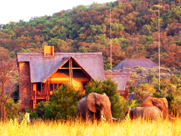 Restaurant with elephants